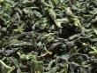画像1: 文山包種茶 50g (1)